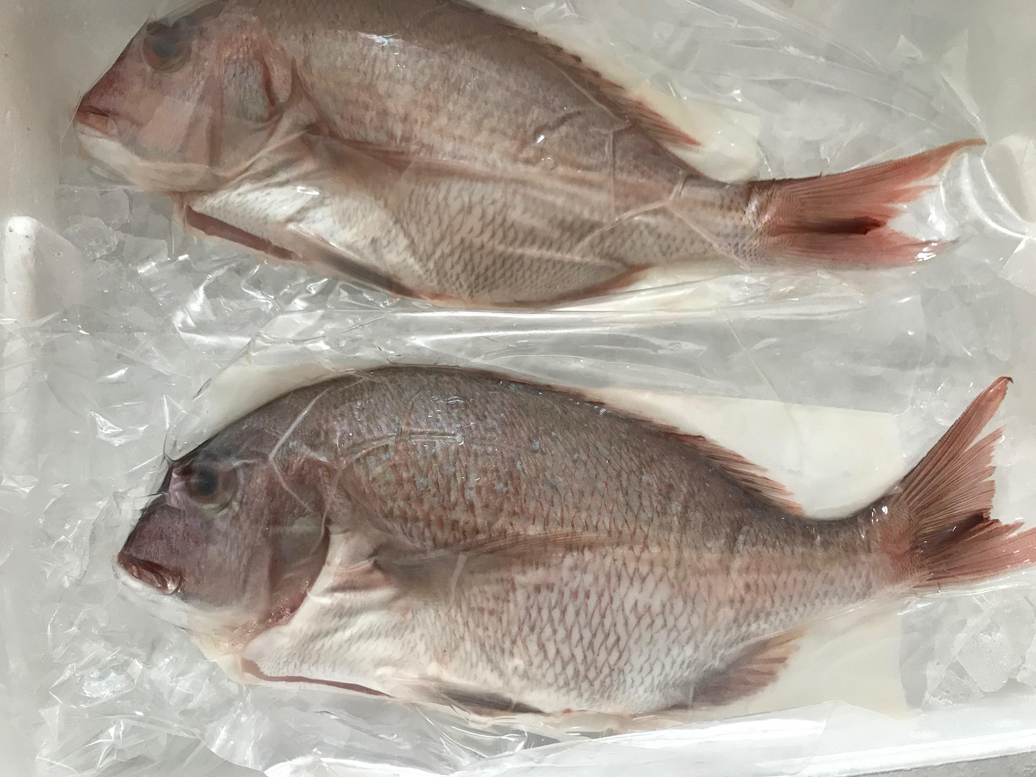 ふるさと納税いちき串木野市鮮魚2
