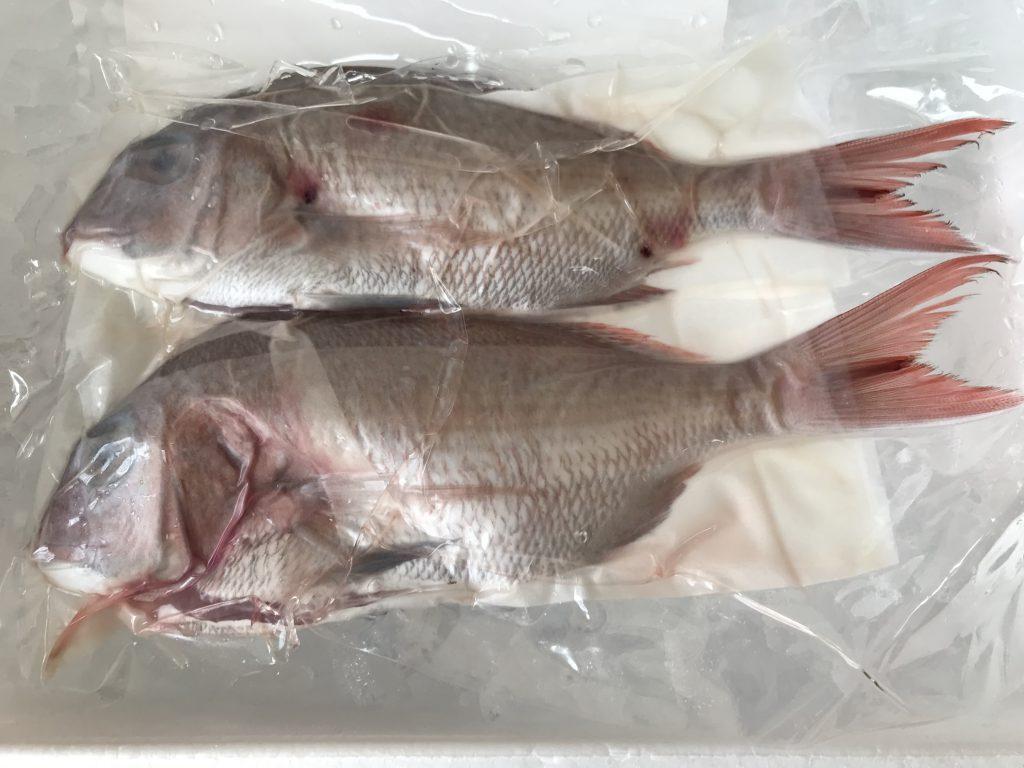 ふるさと納税いちき串木野市鮮魚2月真鯛