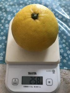 ニューサマーオレンジ重さ